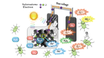 Porous carbon materials for photocatalysis: a solar photoelectrolytic disinfection case study